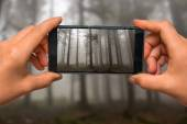 Taking photo of fog in the haunted forest with mobile phone