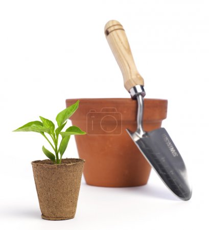 Terracotta pot and trowel with a new plant