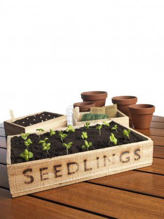 Seeds on ground  in wooden basket