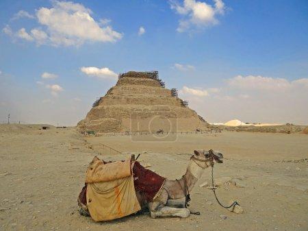 Camel against Dzhoser's pyramid