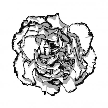Clove flower with edging black and white. Vector illustration