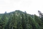 Fotografie vrcholu zelené a v lese v pohoří fagaras, Rumunsko