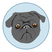 Digital vector pug dog face in blue circle