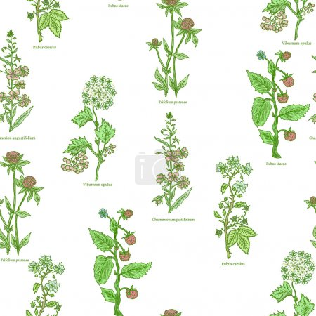 Illustration for Medical herbs and plants seamless pattern hand drawn vintage sketch vector illustration - Royalty Free Image