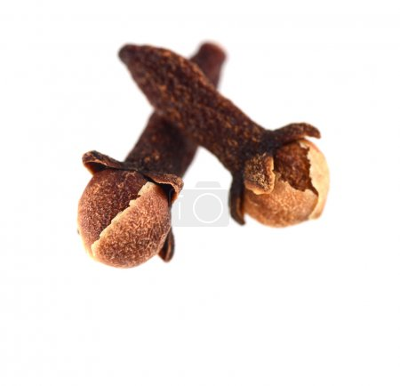 Two Cloves isolated on white background