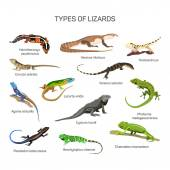 Lizards vector set in flat style design Different kind of lizard reptile species icons collection Isolated on white background
