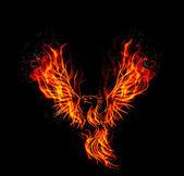 Tűz ég Főnix madár-fekete háttér