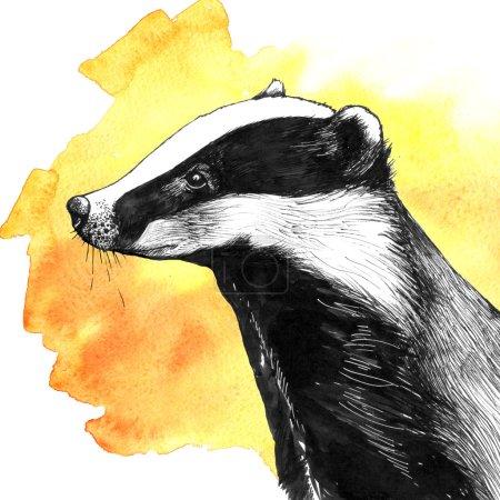 Hand drawn ink sketch of badger
