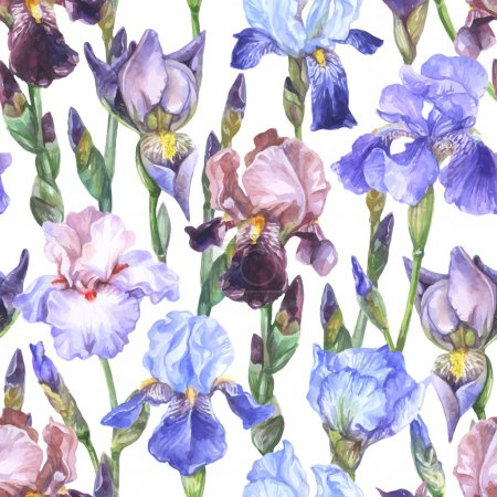 Illustration for Watercolor seamless pattern with blue, pink, purple, brown iris flowers and buds on white background - Royalty Free Image