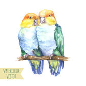 Vector illustration - two bright parrots; isolated love birds on white background