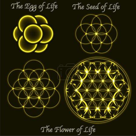 Brass vector flower of life evolution, egg, sacred geometry seed symbols