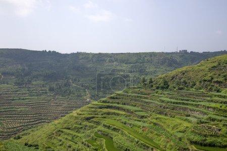 China green and fresh terraces, rice or tea planta...