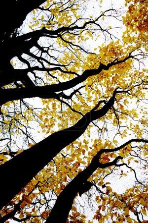 Photo pour Photo de dessin-comme contrasté de la forêt d'automne - image libre de droit