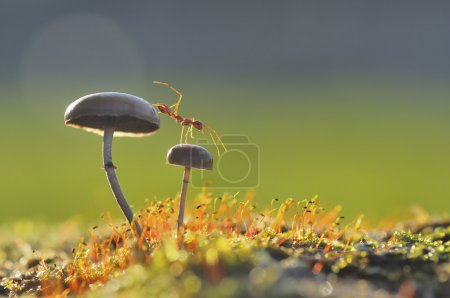 Photo for This weaver want escape from the top of the mushroom - Royalty Free Image