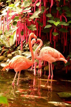 Pair of Pink Flamingos