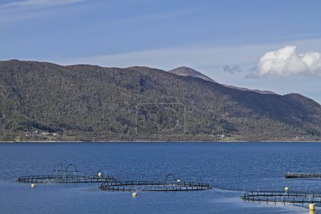 Fish farm in the fjord