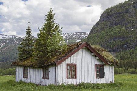 Photo pour Curieusement jardin sur le toit d'une vieille maison norvégienne à Hemsedalen - image libre de droit