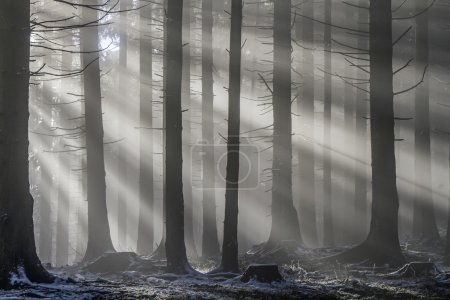 Photo for Sun rays penetrate the misty mountain forest - Royalty Free Image