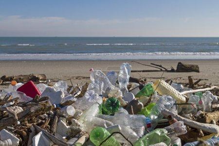 Frühling, Kunststoff, Küste, Papierkorb, Abfälle, Umweltverschmutzung - B80967828