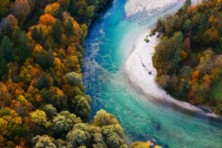 Photo for Pristine alpine turquoise river meandering through forested landscape in a sunny autumn day, aerial view. Pristine, clean nature, pure water, environment concept. - Royalty Free Image