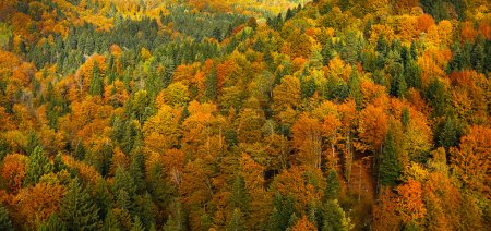 Photo pour Lush, colorful autumn forest landscape, aerial view, textured background. Forestry, pristine nature, environment and sustainable industry concept. - image libre de droit