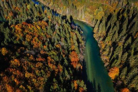 Photo pour Pristine rivière turquoise alpine serpentant à travers boisée paysage dans une journée ensoleillée d'automne, vue aérienne. Nature intacte et propre, l'eau pure concept environnement. - image libre de droit