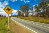Australian Kangaroo Crossing