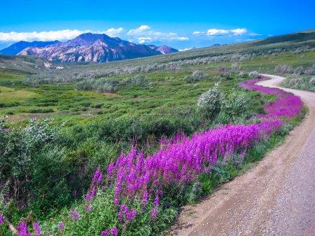 Photo pour Paysage spectaculaire vu de la navette, le seul moyen de transport qui peut faire la route de gravier à l'intérieur du parc. Parc national de Denali en été, Alaska, USA . - image libre de droit