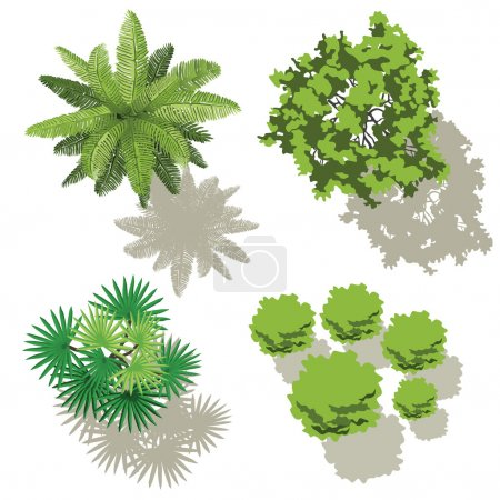 Illustration for 4 types of trees, for map design - Royalty Free Image