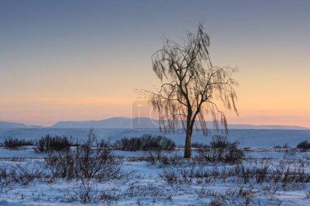 Paisaje invernal con un árbol solitario. Crepúsculo diurno durante la noche polar en el Ártico. Viajes, senderismo y turismo extremo al Lejano Norte. Increíble naturaleza ártica. Chukotka, Siberia, Rusia.