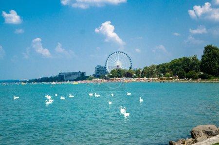 Swan flock on the Balaton lake in Siofok with Ferris wheel in th