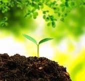 Malý strom nový život