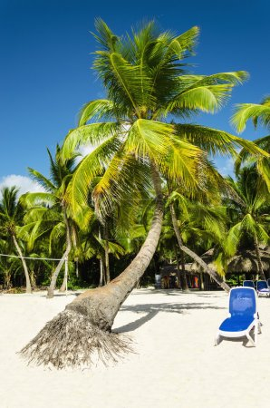 beach with palm trees and sunbed