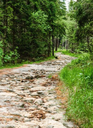 Photo for Stone paved road in green  forest - Royalty Free Image