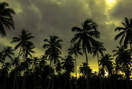 sunset on a Caribbean beach