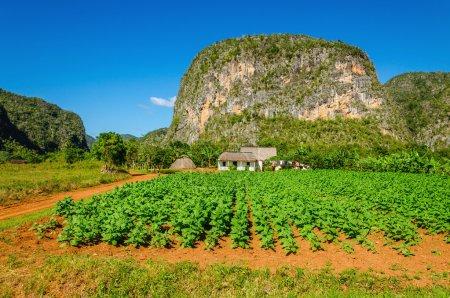 Photo pour Vue typique de la Valle de Vinales avec ferme et mogotes à Cuba - image libre de droit
