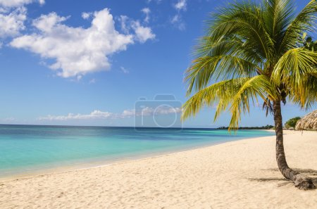 Exotic sandy beach with palm