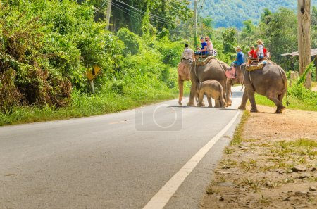 Photo for Elephant ride in elefant village near Chiang Mai, Thailand - Royalty Free Image