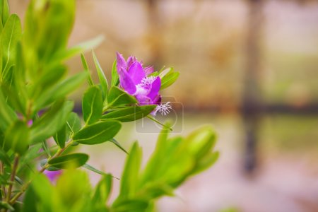 Floral background branch purple flowers with green leaves