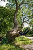 Mladý muž vypadá, jako že je sežrána velký strom v parku