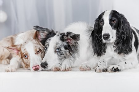 Three dogs together