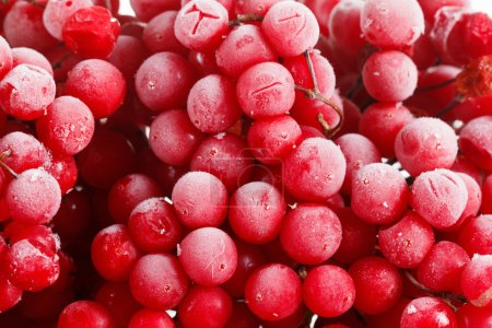 Guelder-rose, viburnum, frozen for long term stora...