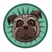 Malý pes Mops