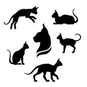 Sphynx cat icons and silhouettes