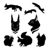 Squirrel set vector