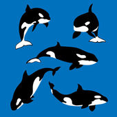 Killer whale set of vector silhouettes with white spots on blue background