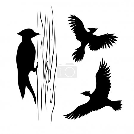 Vector silhouettes of a woodpecker.