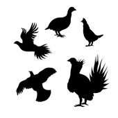 Grouse icons and silhouettes Set of illustrations in different poses