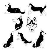 Graphic silhouette of a dog of breed siberian husky