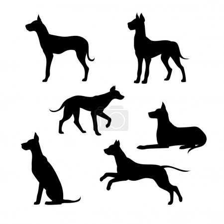 Breed of a dog great dane vector silhouettes.